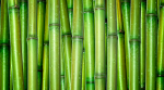 Зеленые доски зеленый,